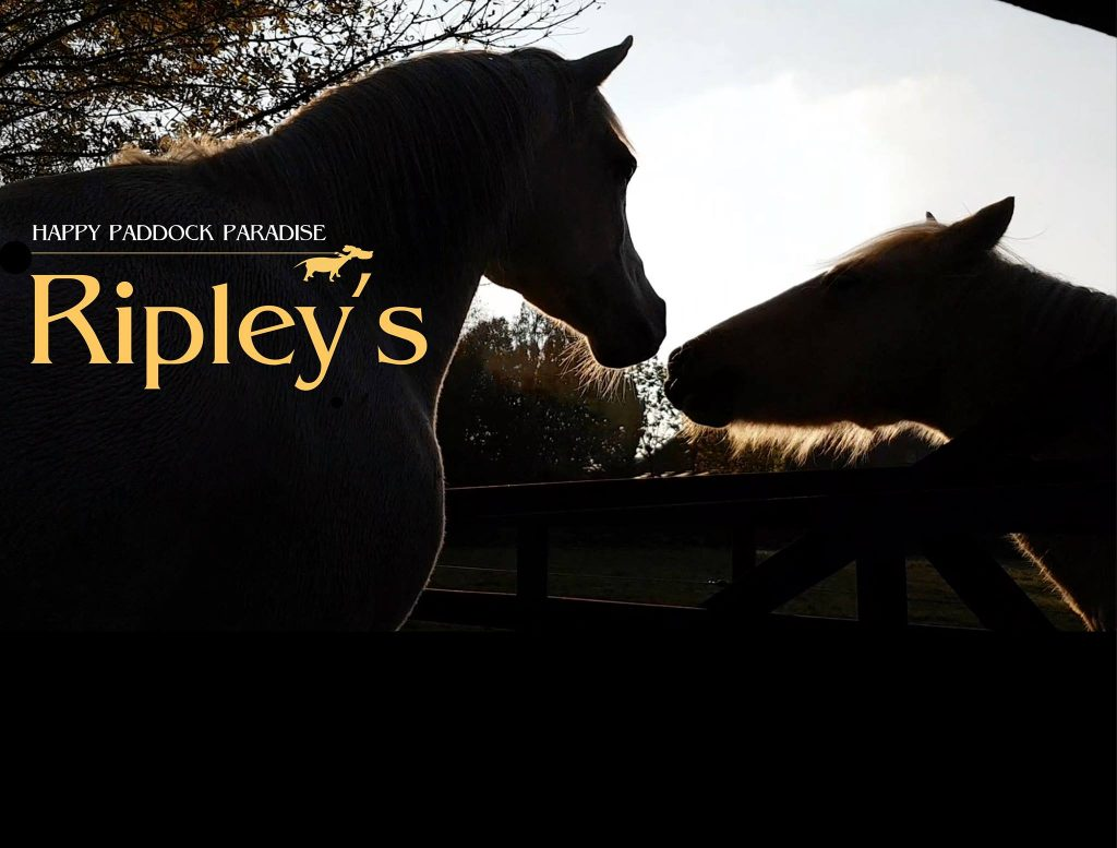 Stal Ripley's