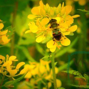 Bijen & Insecten