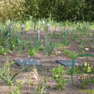 Viva Hortus tuinen en permacultuur