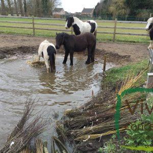 Verzorging voor paarden
